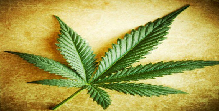 marijuana-leafAI-770w.jpg